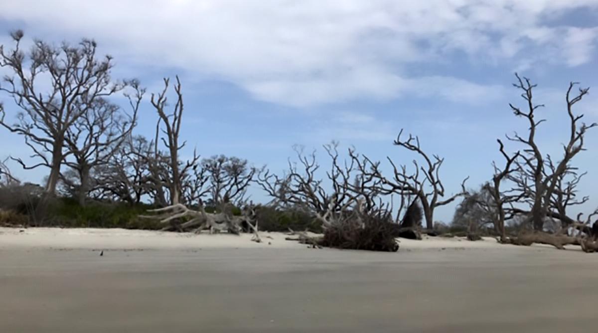 Jekyll Island - Driftwood