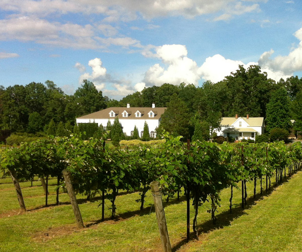 Stonefield Cellars Winery - Vineyard